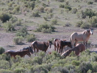 Feral Horse essays