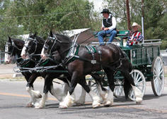 Diamond Z English Shire Horses