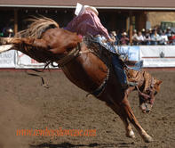 rodeo saddle bronc