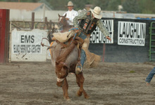 cold backed bronc