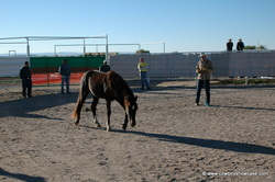 Training the prisoners and the wild horses
