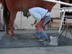 good shoeing is important