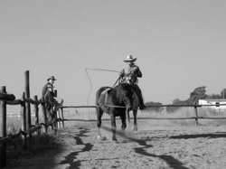 Long reining off horseback